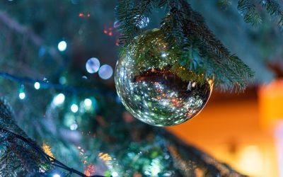 Vánoční stromek rozzářil univerzitu