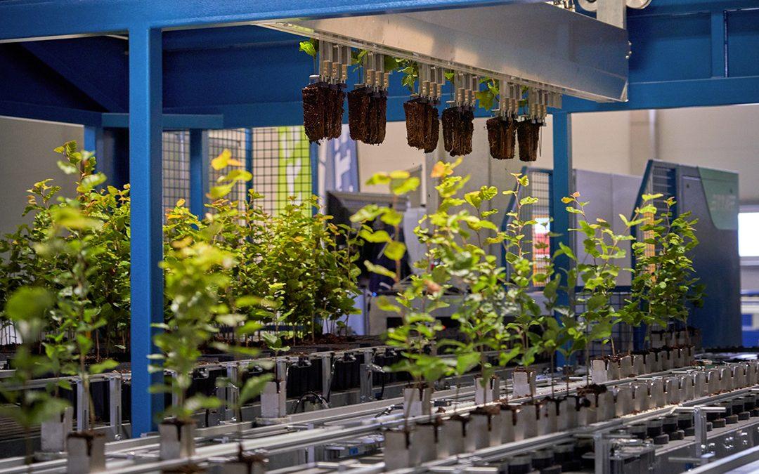 Zlínští vědci vynalezli inteligentní systém pro pokročilé třídění lesních sazenic